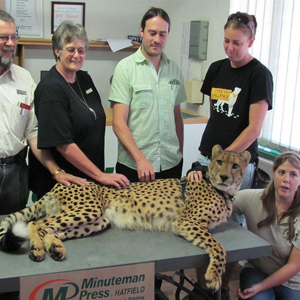 de-wildt-cheetah-centre-veterinarian