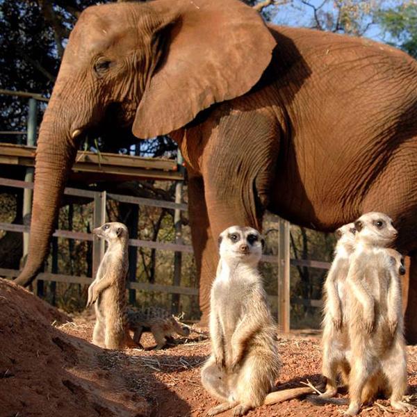 elephant-sanctuary-gauteng-steward-travel-1