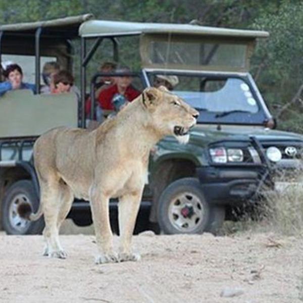 lion-and-safari-park-tour-steward-travel-1
