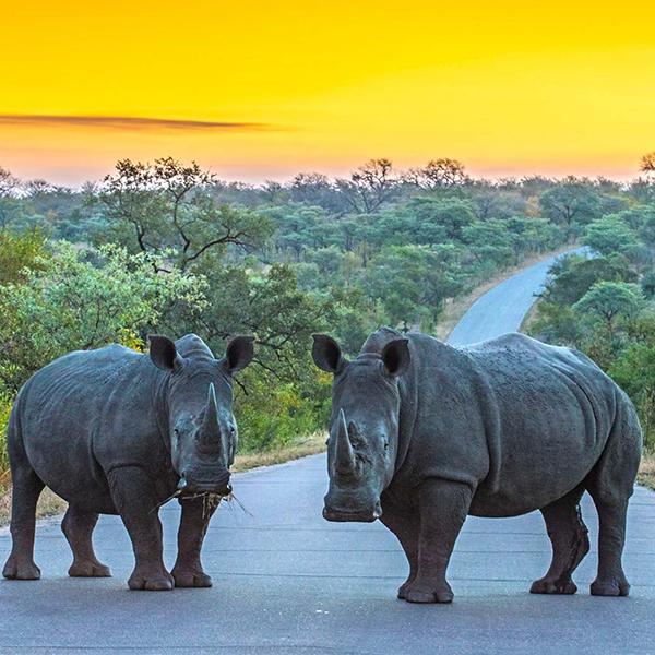 rhino-and-lion-park-steward-travel-1