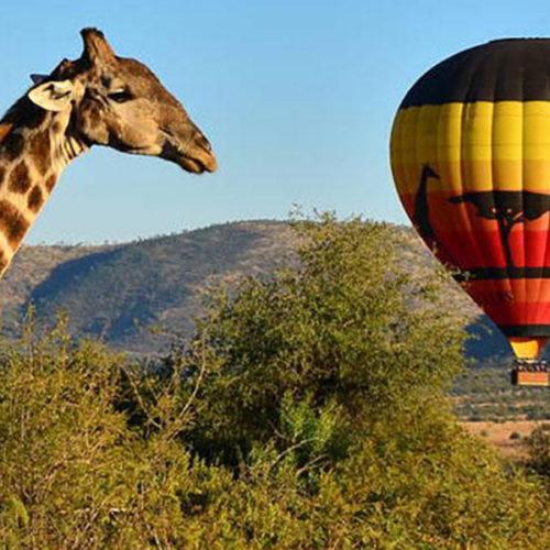 sun-city-pilanesberg-national-park-steward-travel-1